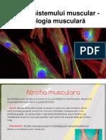 Boli Ale Sistemului Muscular
