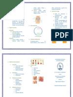 Salud sexual y reproductiva triptico.docx