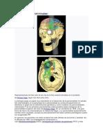 Teorías biopsicológicas