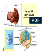 Sistema Nervoso Le Aree Del Cervello