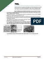 a14_mitocondriacatabolismo-convertido