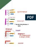 Phospholipid s