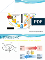 11 Introduccion Al Metabolismo