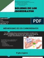 16 Metabolismo de Carbohidratos