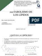 17 Metabolismo lipidos