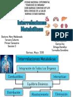 19 Interrelaciones Metabólicas