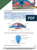 Embrion Trilaminar 2019