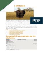 Elefante Africano y Asiatico