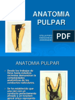 Anatomia Premolares