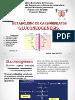 Gluconeogenesis, Tema 19