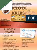 CICLO de KREBS (Diapositivas)