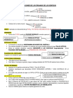 Resumen de Embriologia