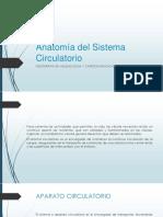 Anatomía Del Sistema Circulatorio