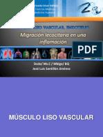 Sesión_12_MUSCULO_LISO_VASCULAR_ENDOTELIO_MIGRACION_LEUCOITARIA.. (2).pdf