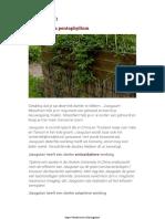 Jiaogulan - Voor Een Langer en Gezonder Leven_ Wetenschappelijk Bewezen