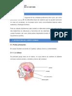 Tema 3 - Nociones de Anatomía