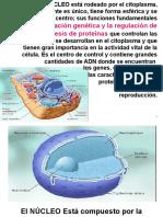 Cab.pdf