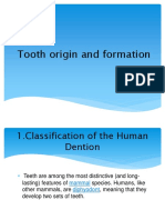Tooth Origin and Formation