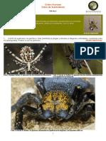 Clave Para La Determinación de Los Subórdenes Ibéricos de Araneae
