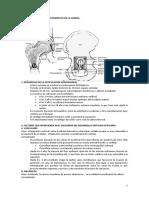 Tema 20 -  Malformaciones Congénitas de La Cadera.