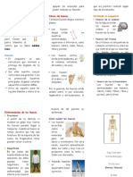 Sistema Oseo Inicial