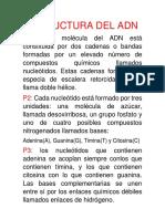 Estructura Del ADN y Síntesis de proteínas