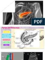 Diapo Pancreas.