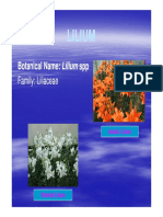 VSF 231 Flori Lect 14 Lilium