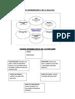 59001233-CADENA-EPIDEMIOLOGICA-DE-LA-MALARIA.docx
