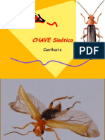 Cantharis (2006)