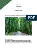 Proyecto de Investigacion Del Bambu