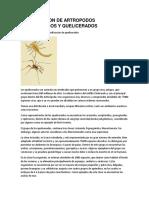 Investigacion de Artropodos Mandibulados y Quelicerados