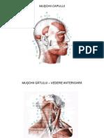 Anatomia Omului Muschii Prezentare Interactiva