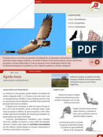 011 Aguila Mora