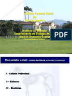 Esqueleto Axial Coluna Vert.biol