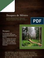 Bosques de México