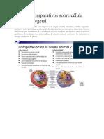 Cuadros Comparativos Sobre Célula Animal y Vegetal LA CELULA