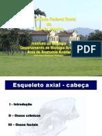 Esqueleto Axial Cabeca Biol