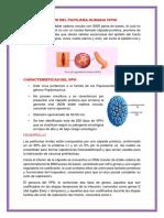 Concepto Del Virus Del Papiloma Humana
