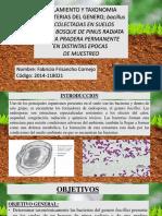 AISLAMIENTO Y TAXONOMIA DE BACTERIAS DEL GENERO; bacillus  RECOLECTADAS EN SUELOS DE UN BOSQUE DE PINUS RADIATA Y UNA PRADERA PERMANENTE EN DISTINTAS EPOCAS  DE MUESTREO