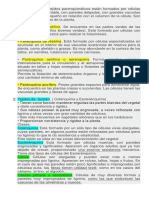 resumen_tejidos_fundamentales