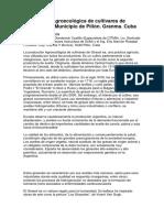 Producción Agroecológica de Cultivares de Girasol en El Municipio de Piilón NEGRI