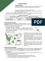 EsquemaBiologia1ESO 8 Las Plant As