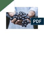 Circuito Productivo Del Vino y Tomate