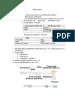 Duplicacion_transcripcion_y_traduccion.docx