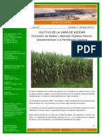 057---12.05.11-.-Cultivo-de-la-Can--771-a-de-Azu--769-car..fosfato