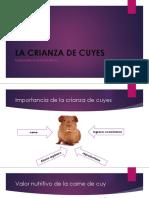 Clasificación y Sistemas de Producción Cuyes [Autoguardado]