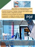 Embriologia-genetica