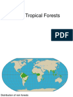 Tropical Forests.ppt
