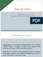 Clase 6- Unidad I - Evidencias evolutivas embiologicas y anatomicas - 230511.pptx